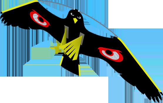 terror hawk bird scaring kites from portek
