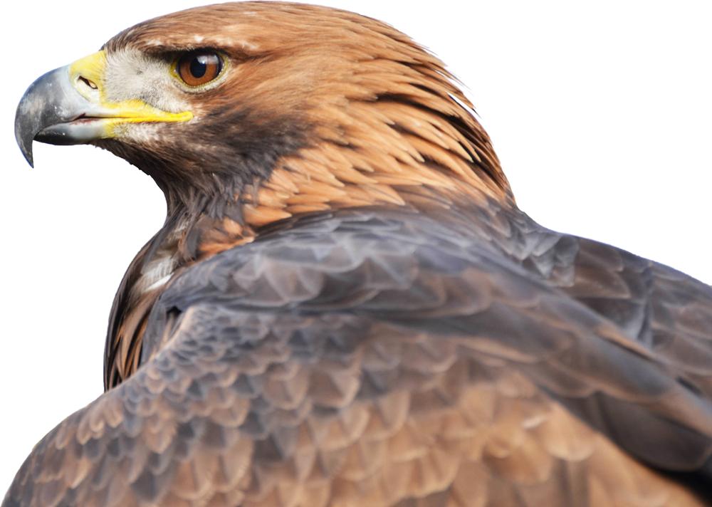 portek birdyell audio birdscaring sound effects
