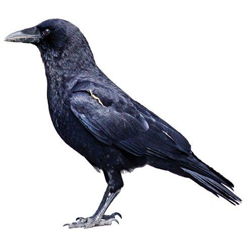 silent bird scaring portek