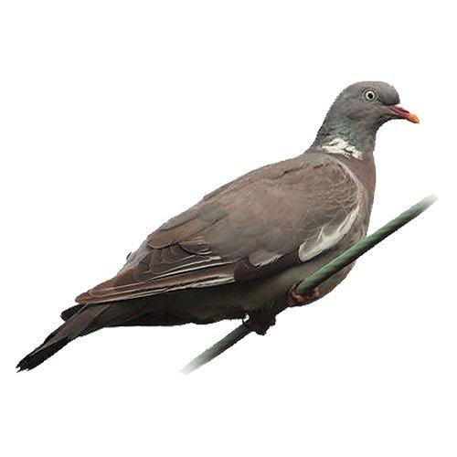 portek bird scarers